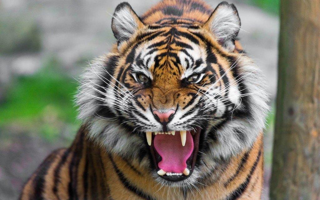 Nederlandse werkgever zoekt spinnen en tijgers
