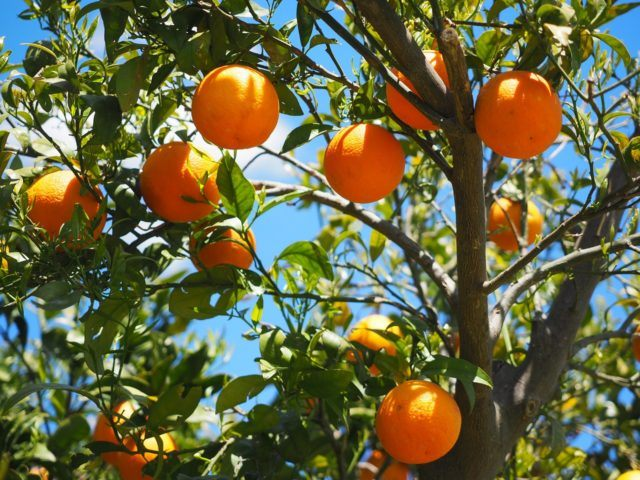 vacaturetekst vacatureteksten laaghangend fruit