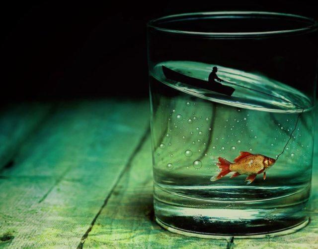 goudvis sourcen