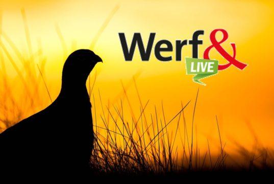 vroegste vogels werf& live