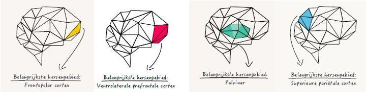 hersengebieden alle 4 brainsfirst