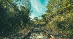 jungle transparant