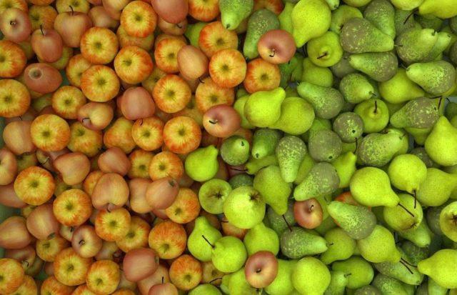 appels peren