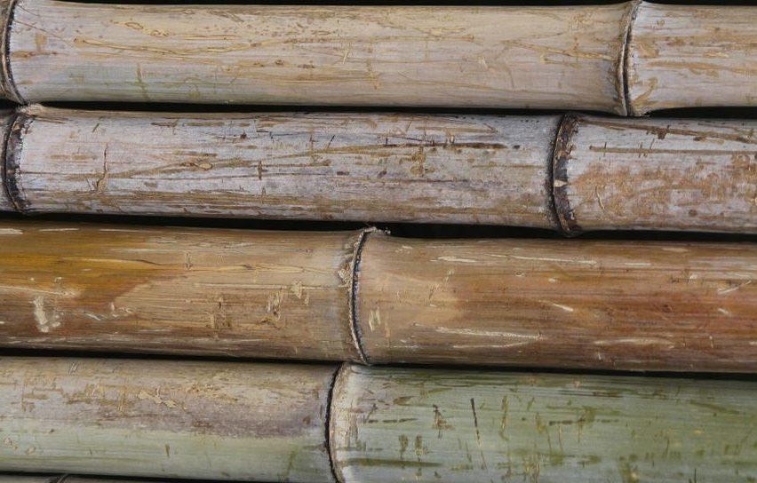 bamboe plafond enthousiasme