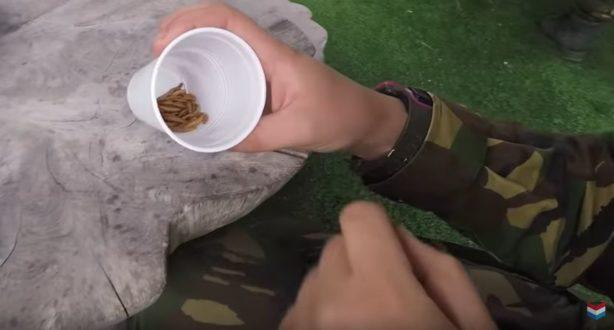 wormen eten opleiding officieren
