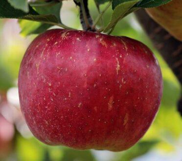 laaghangend fruit