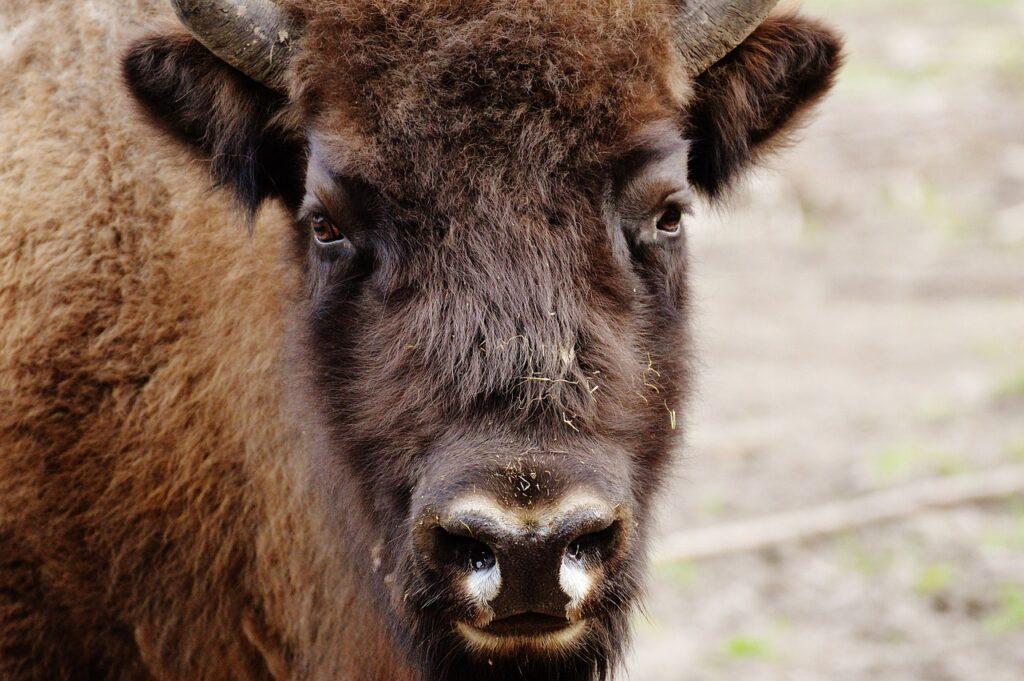 Feel Good Friday: een wel heel bizon-dere vacature