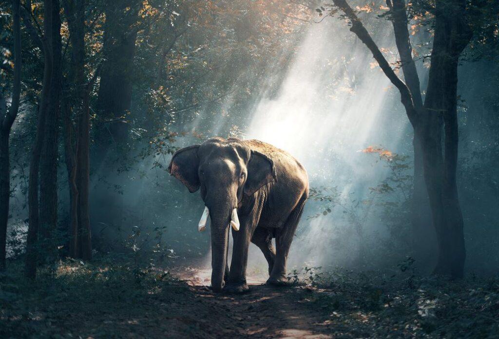 Feel Good Friday: Wat zou jij doen als je een olifant cadeau kreeg?